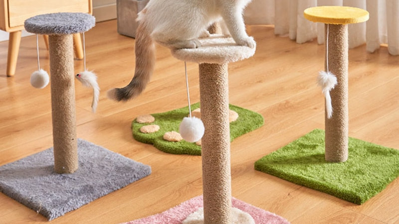 Colourful Cat Scratching Posts