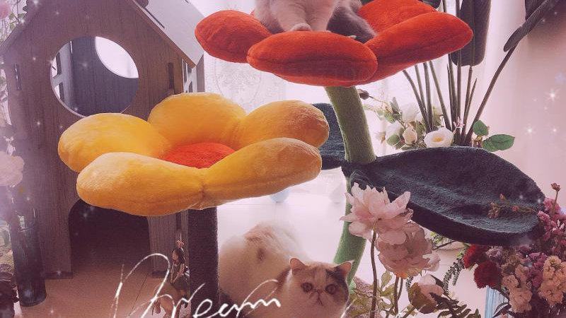 Flower Cat Climbing Frame