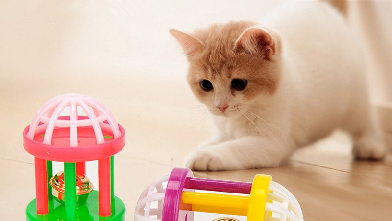 Cat Interactive Toy with Bell