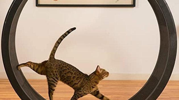 Cat Running Wheel