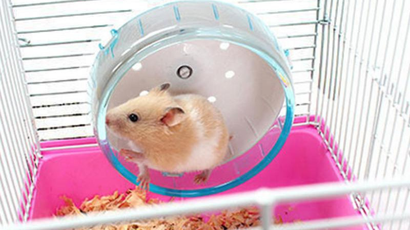 Small Pets Exercise Wheel