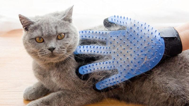 Pet Grooming Hair Removal Glove