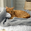 Thumbnail: Pet Cat Sleeping Bags