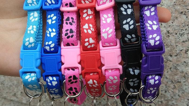 Colourful Kitty Collars