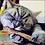 Thumbnail: Catnip Teeth Cleaner