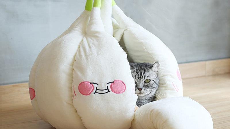 Funny Garlic Cat Cave