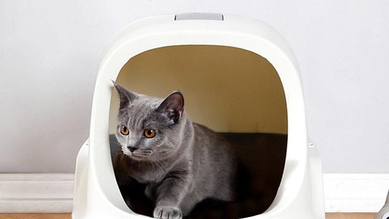 Pet Cat Litter Box