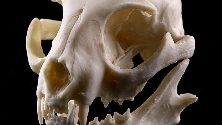 Cat Resin Model Skull