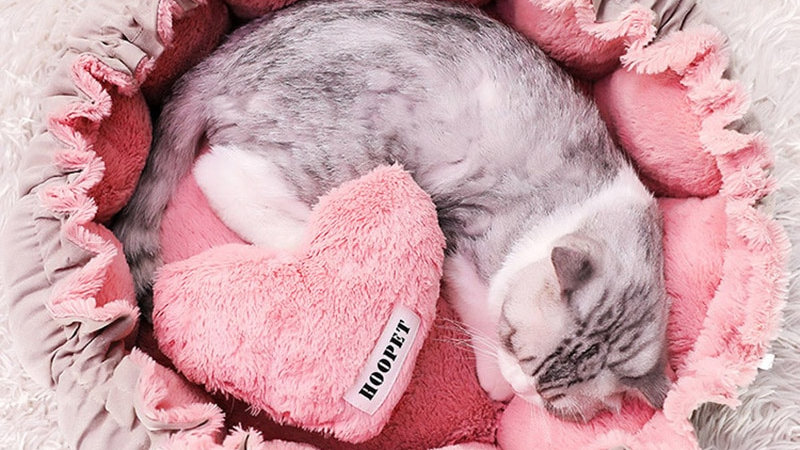Cute Pink Kitty Bed