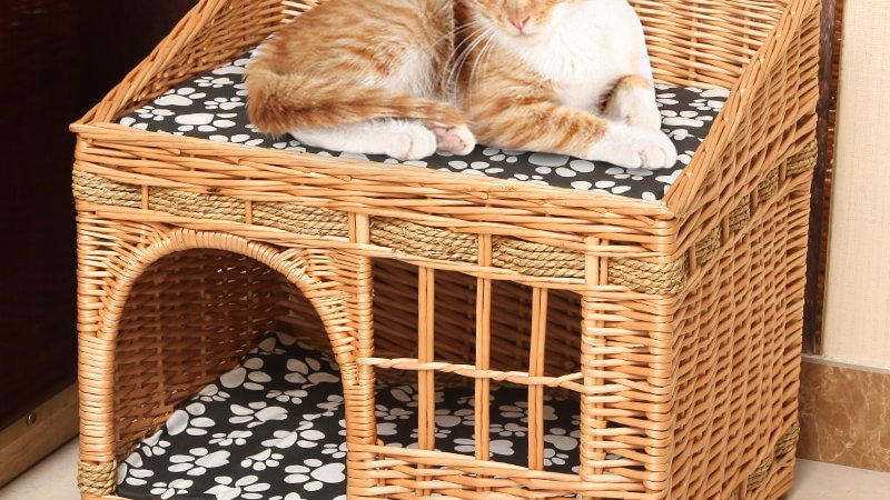 Willow Basket Cats Nest