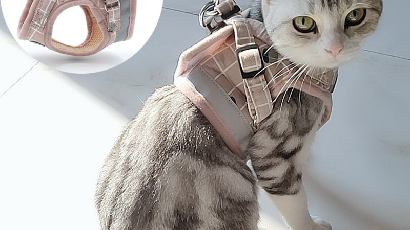 Cats Harness and Lead Set