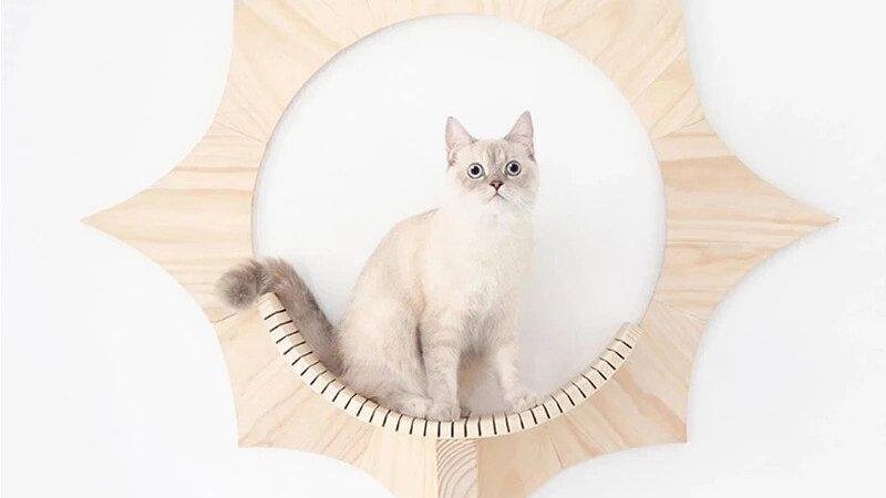 Wall Mounted Sun Cat Climber