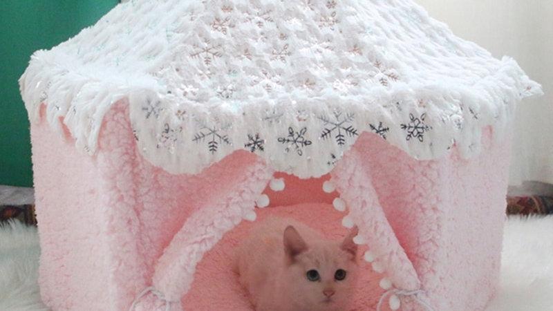 Cute Kitty House