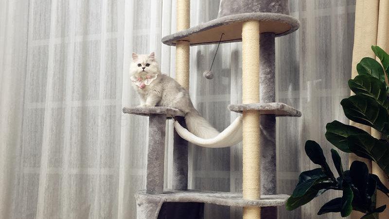 Climbing Frame Cat Tree