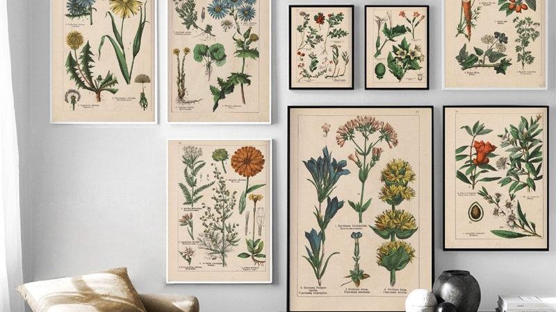 Vintage Botanical Herbs Posters