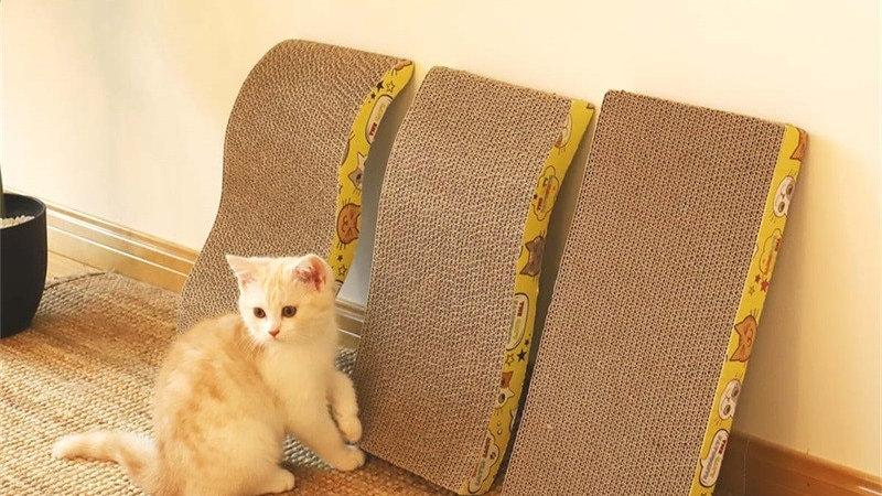 Paw-some Cat Scratcher
