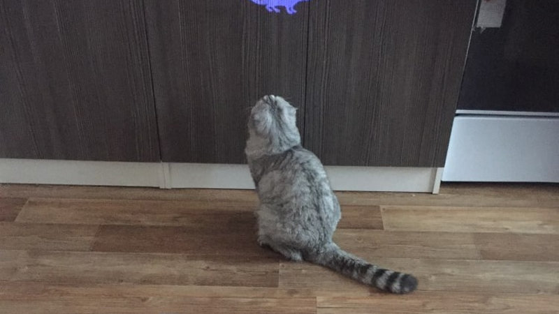 LED Pointer Toy for Cats