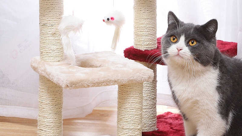 Cat Climbing Frame with Scratcher
