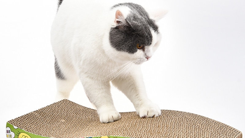 Engaging Kitty Scratcher