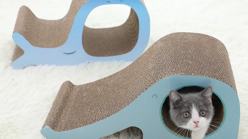 Kitten Scratch Board