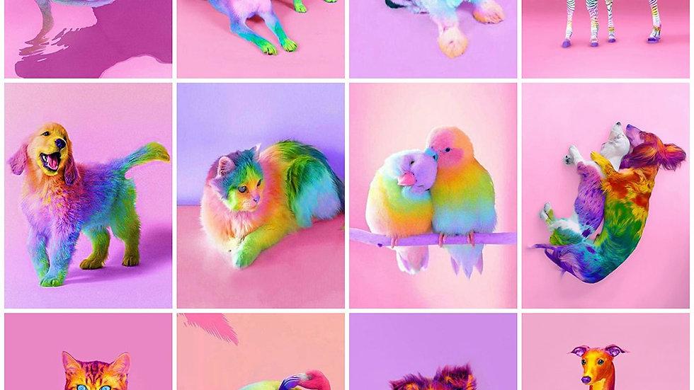 Colourful Animal Diamond Art