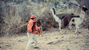 Llama Trek, una experiencia Inolvidable!