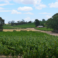 The Southern Barossa Valley