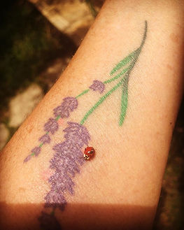 Ladybug landed on my arm