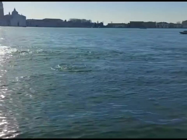 Dolphins seen in Venice canals during lockdown