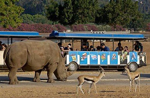 israel-zoo-and-safari-train.jpg