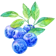Blueberry3.png