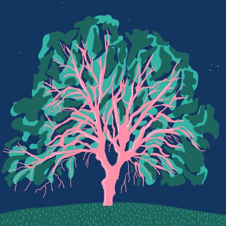 Planter des arbres pour sauver la planète ?