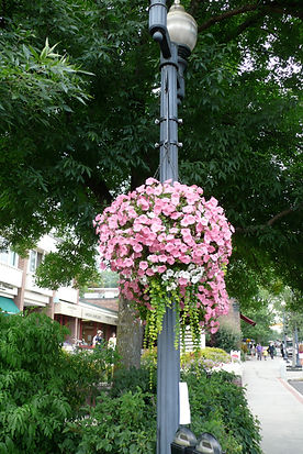 Pink hanging flower basket in front of the Nugget block.