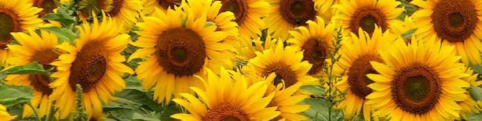 Header_Sunflowers.jpg