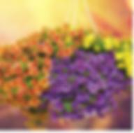 Screen Shot 2020-04-28 at 10.18.45 PM.pn