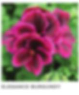 Screen Shot 2020-04-28 at 10.27.08 PM.pn