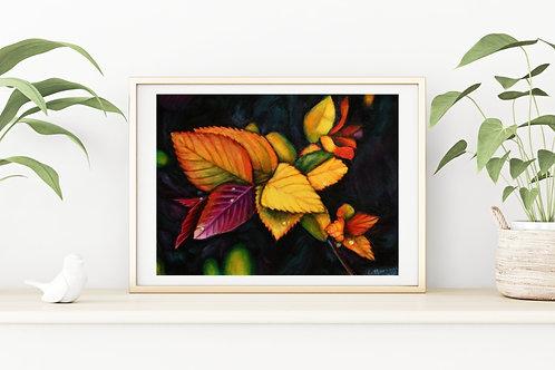 Raindrops Fine Art & Canvas Prints
