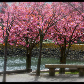Ahh, Spring…
