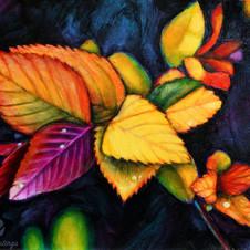 Rainbow Leaves with Raindrops
