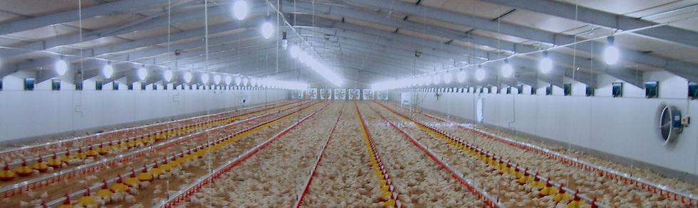 ventilation-poultry.jpg