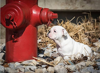 Hydrant_and_puppy.jpg