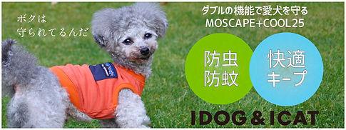 IDOG & ICAT