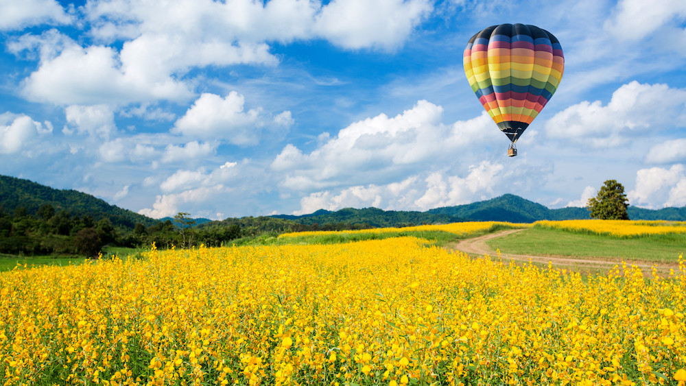 photo of a hot air balloon over a field of yellow flowers