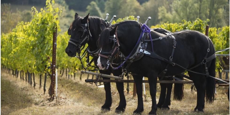 Illahe Vineyard Wine Tasting
