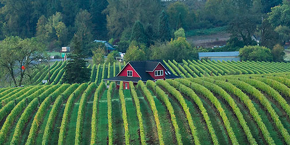 Sokol Blosser Oregon Wine Tasting