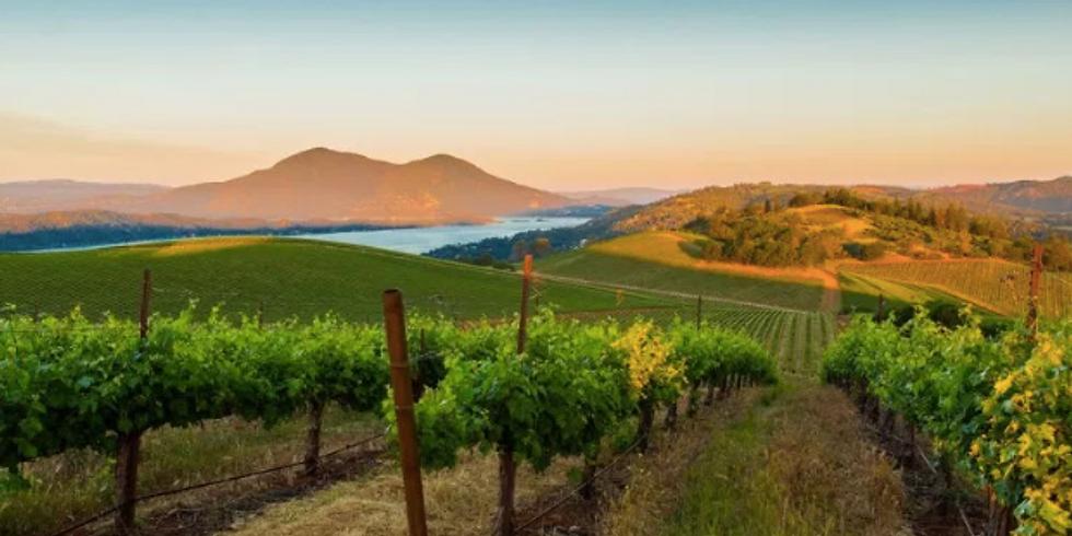 Shannon Ridge Winery Tasting Event