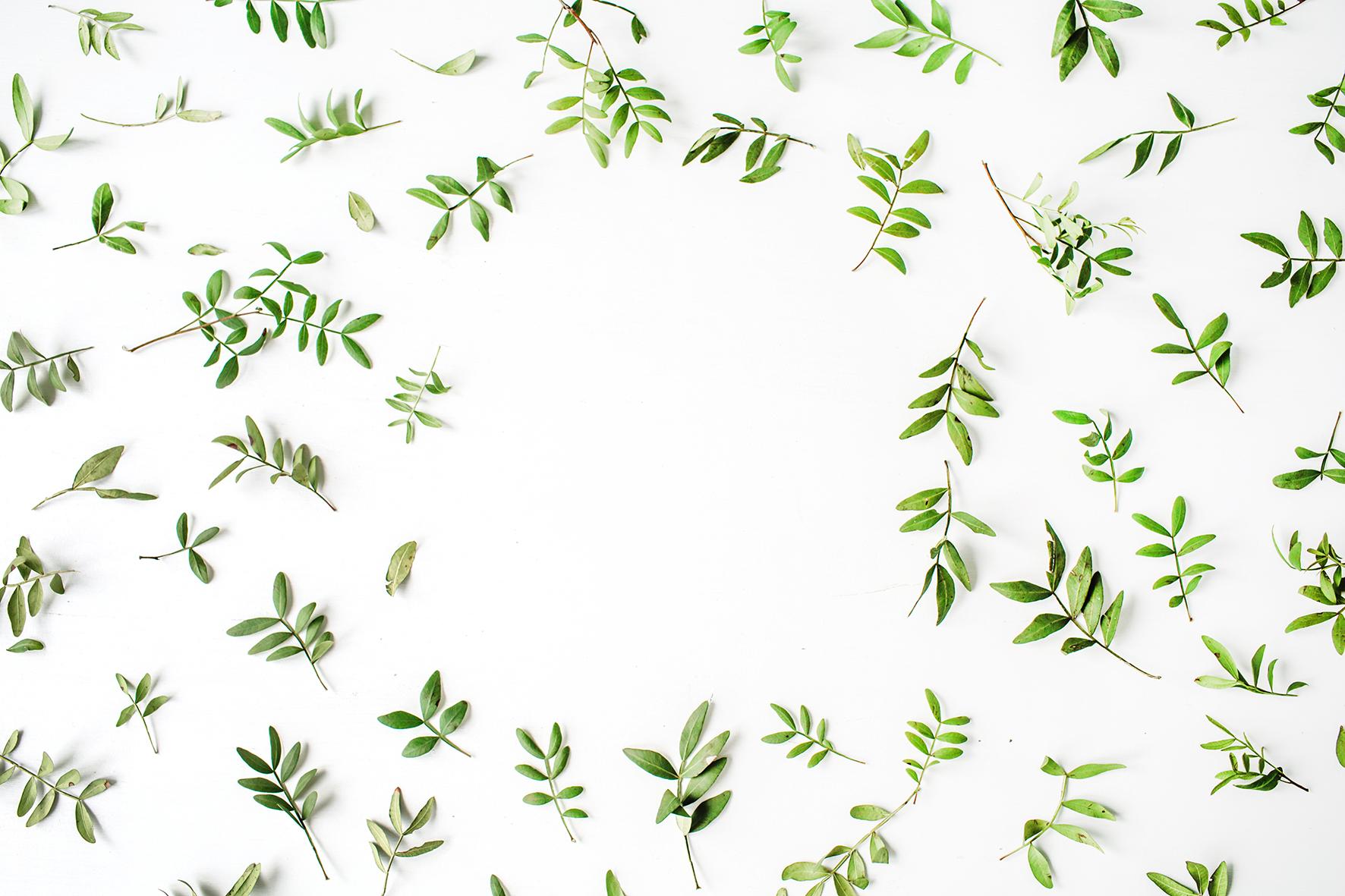 Végétal pontarlier malbuisson