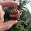 Thumbnail: Carnelian w/copper