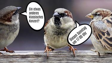 """Klassisches Konzert """"Divo/Diva"""""""