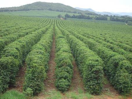 Presidente do CNC destaca os cenários da cafeicultura pós-pandemia